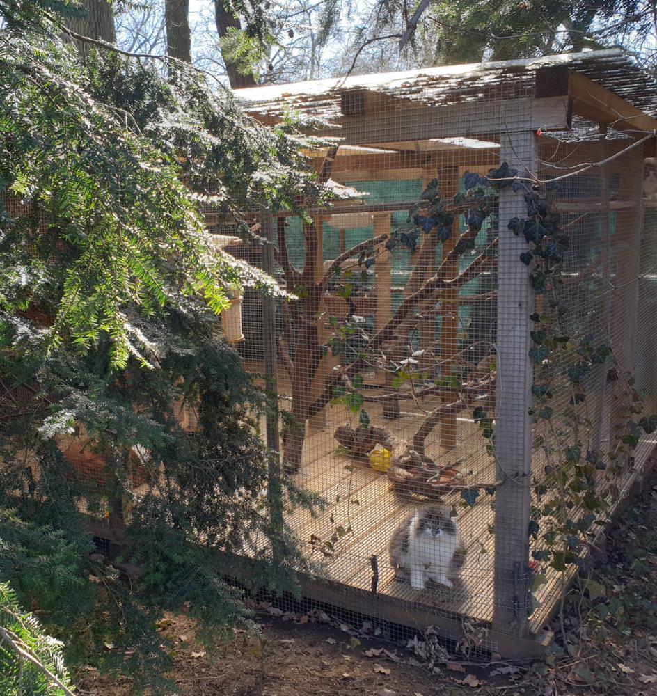 norwegische-waldkatzen-haselgraben-20210301_140251-web